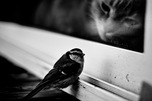 Cat watches bird